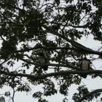 Rurrenabaque-Pampas-Dschungel-217.jpg