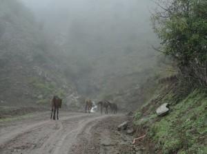 Stolze Pferde