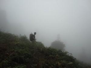 Verloren in Wald und Nebel