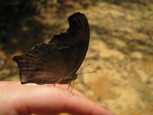 Leider hat er seine Flügel nicht aufmachen wollen - er war wunderschön blau!