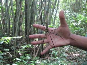 Das ist NICHT meine Hand :-)