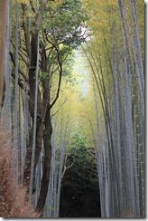 Kyoto (73)
