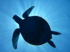 Schildkröte von unten