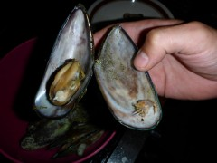Coromandelmuschel links Muschel, rechts Muschelkrebs beides schmeckt hervorragend