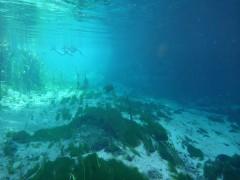 Schnorcheln bei 50m Sicht im Rio Sucuri