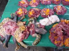 Lecker Turtle