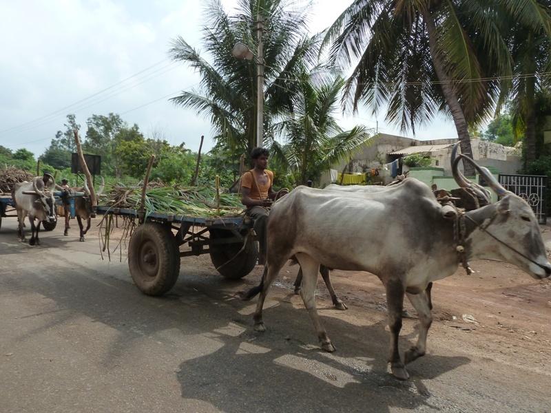 Hier gibt es noch Kuehe statt Traktoren