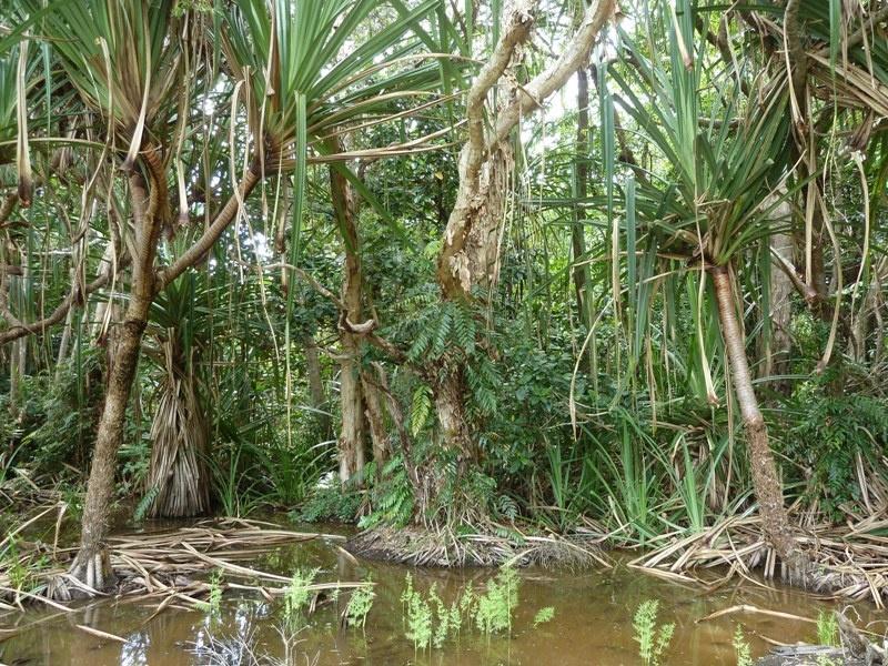 Regenwaldpark, Cairns