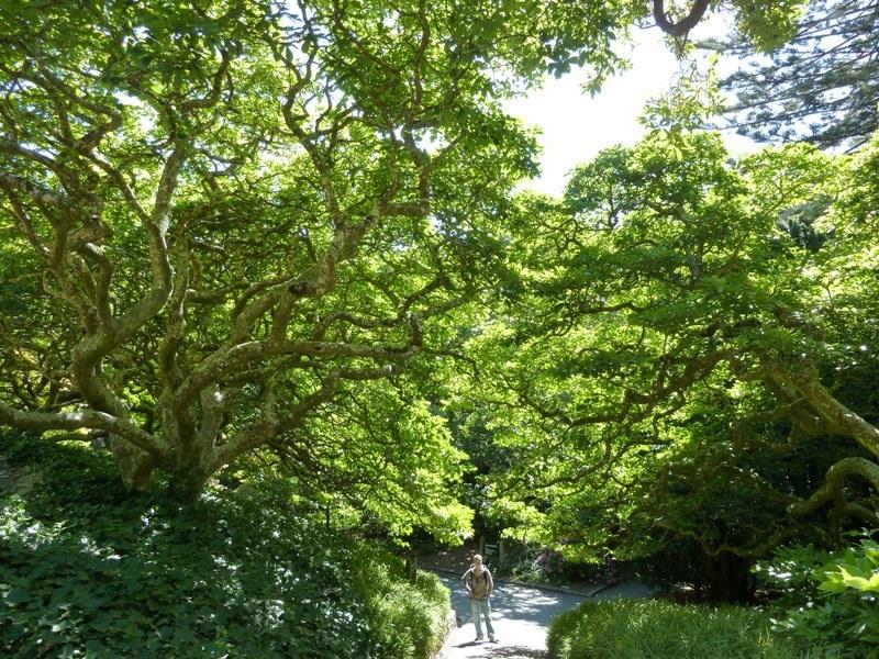 Botanical Garden, Wellington