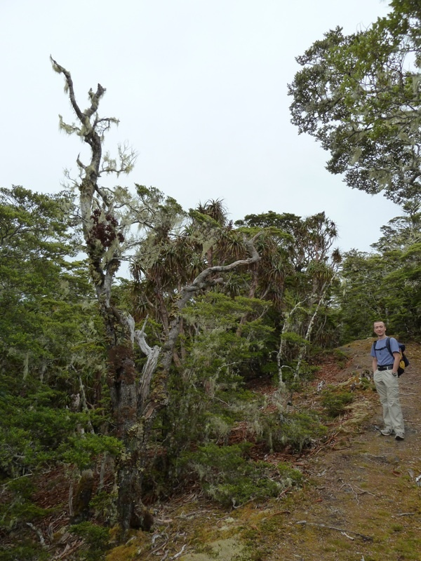 "Wanderung auf den ""Mount Lodgestone"", Kahurangi National Park"