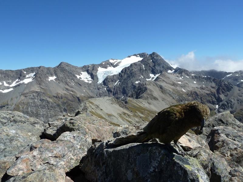 Tolle Ausblicke und Bergpapageien (Kea) ueberall :-)