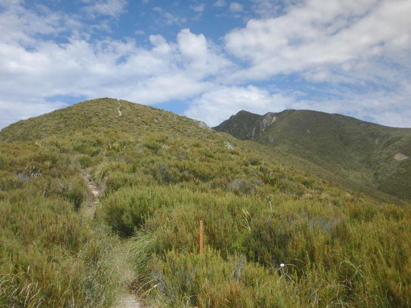 der Weg zum Gipfel (das Spitzerl in der Mitte des Fotos)
