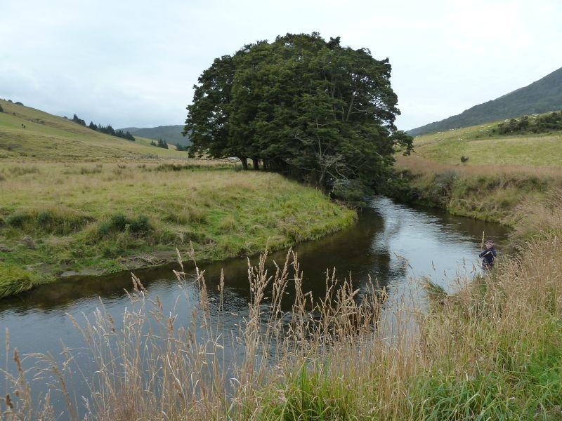 """Fischen am Catlins River (die fette Forelle ist leider wieder abgesprungen...), """"The Wisp"""" beim Catlins Rainforest Reserve"""