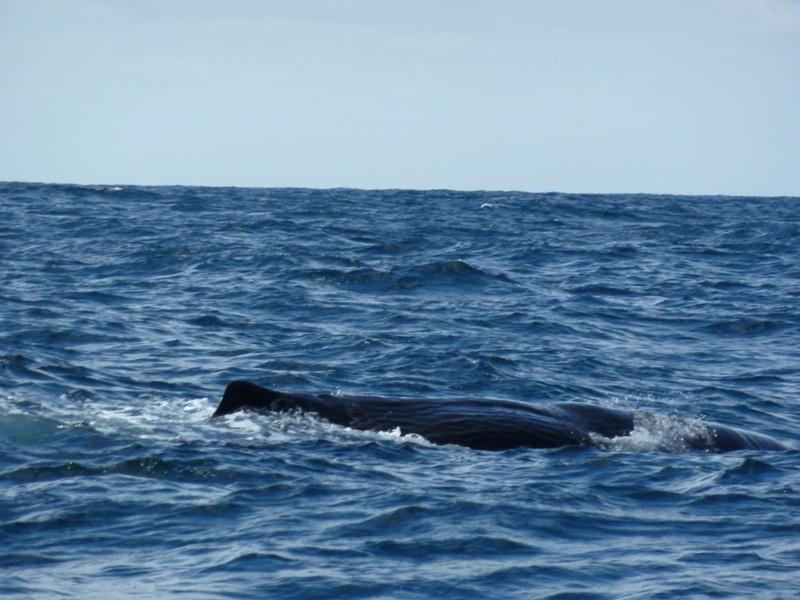 """""""Whale Watching""""-Bootstour beim """"Kaikoura Canyon"""", Kaikoura"""