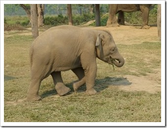 im Elephant Breeding Center