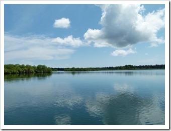 Mangrovenlandschaft