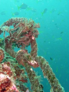 Do you see the scorpion fish?
