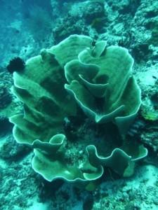 underwater impressions