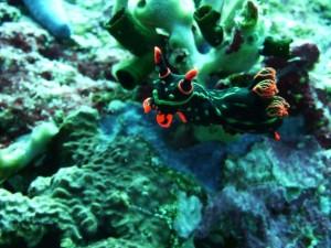 nudibranch watching me!