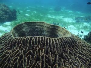 a underwater vulcano.............or a sponge