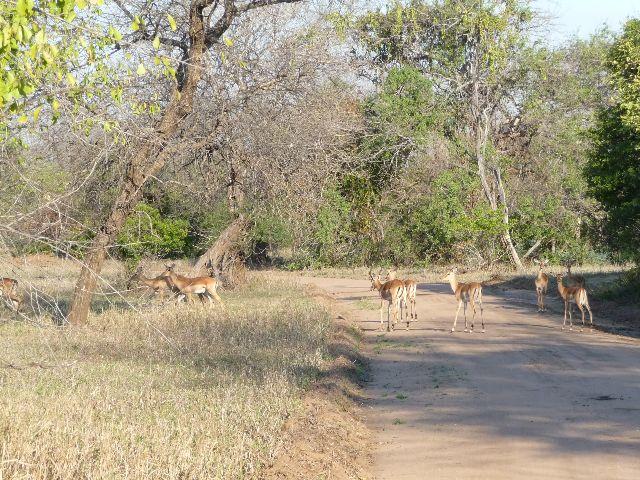 Malawi 2009 001