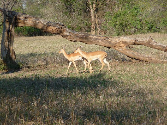 Malawi 2009 003 (2)