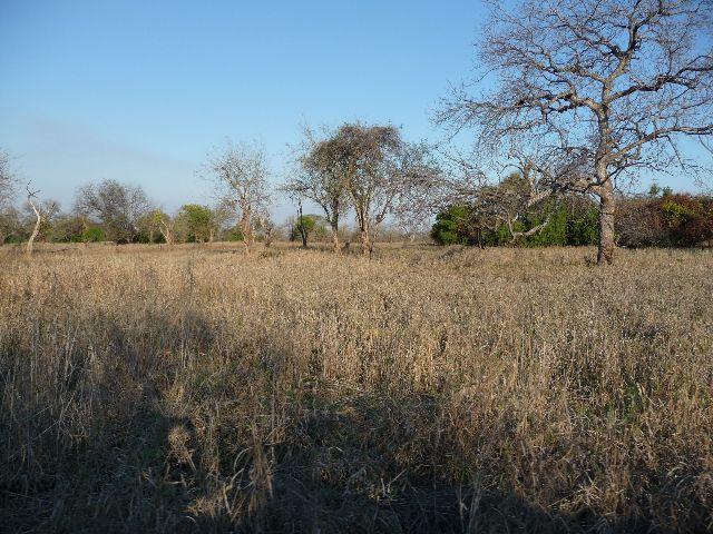 Malawi 2009 005 (2)