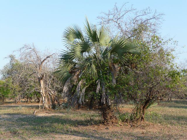 Malawi 2009 027 (2)