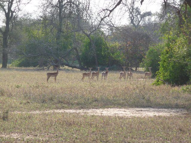 Malawi 2009 028 (2)