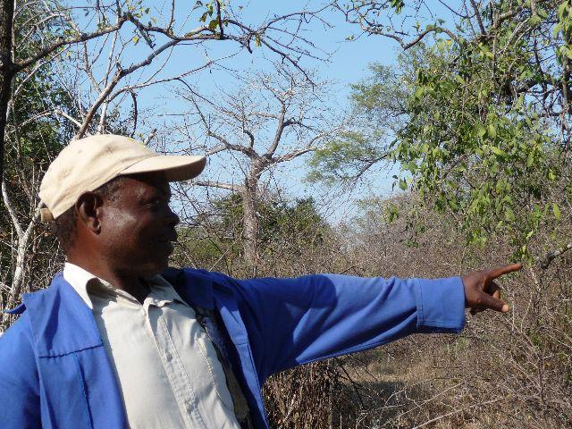 Malawi 2009 033 (3)