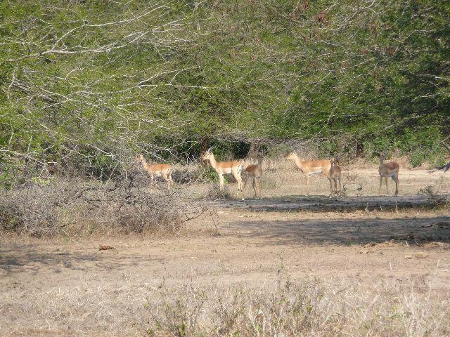 Malawi 2009 035 (3)