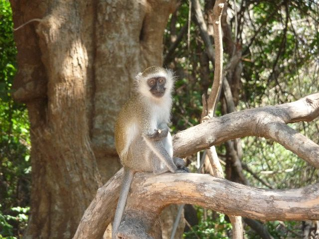 Malawi 2009 038 (3)