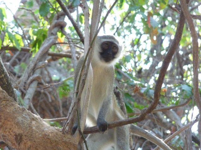 Malawi 2009 041 (3)