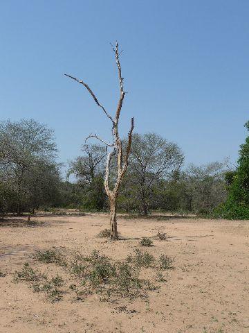 Malawi 2009 045 (3)