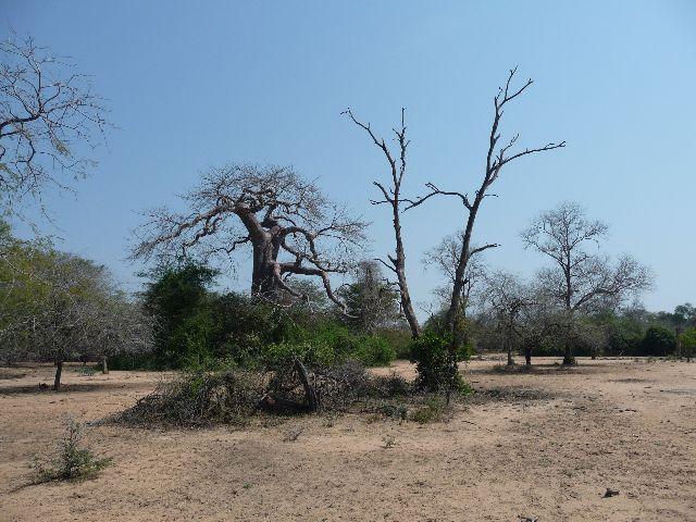 Malawi 2009 047 (3)