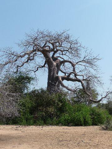 Malawi 2009 048 (3)