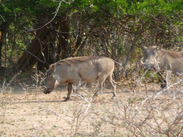 Malawi 2009 053 (3)