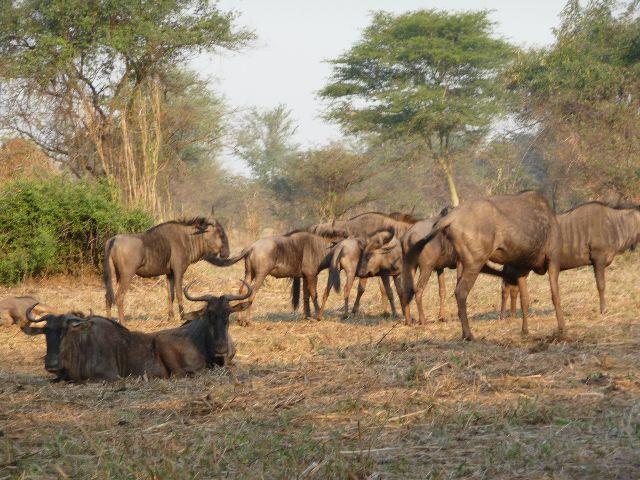 Malawi 2009 058 (3)