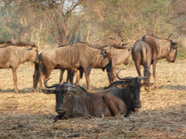 Malawi 2009 059 (2)
