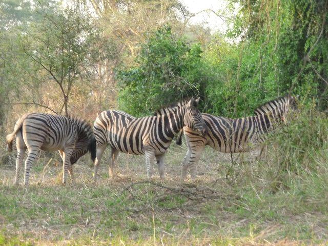 Malawi 2009 063