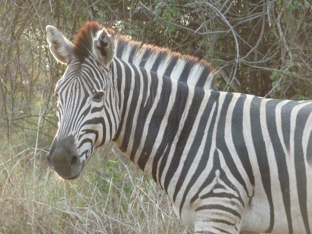 Malawi 2009 064 (2)