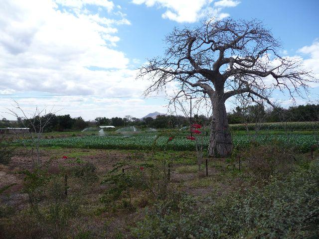 Malawi 2009 065