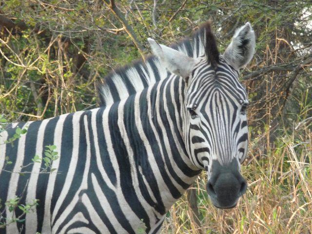 Malawi 2009 067 (2)