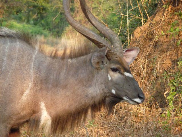 Malawi 2009 068 (2)