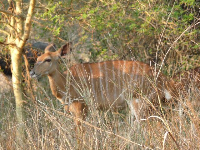 Malawi 2009 069 (3)
