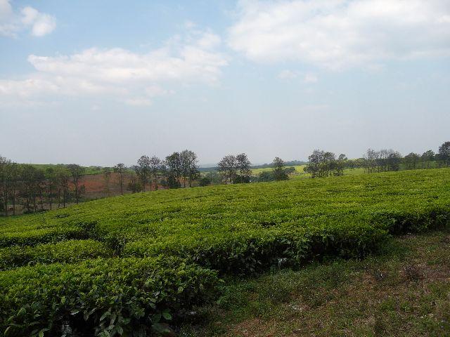 Malawi 2009 099
