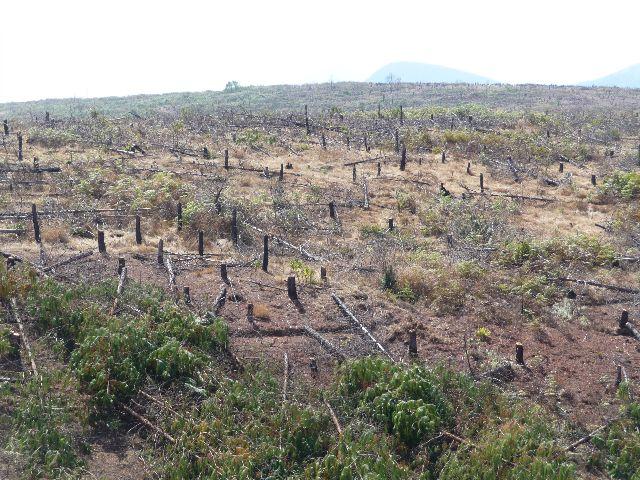 Malawi 2009 127 (3)