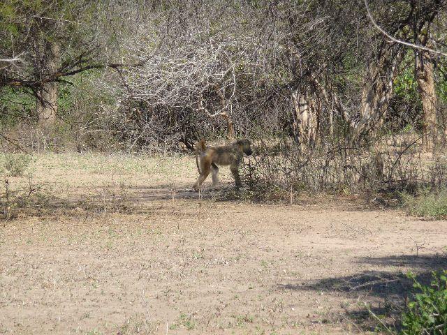 Malawi 2009 140 (2)