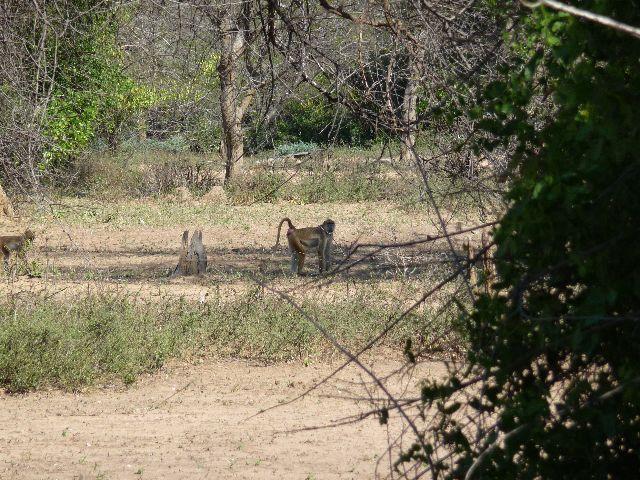 Malawi 2009 141 (2)