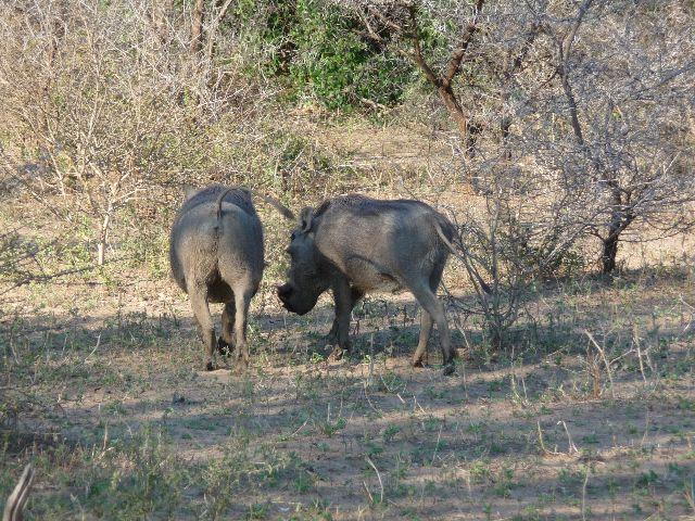 Malawi 2009 143